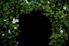 Las flores y las plantas hacen un túnel, espacio en blanco para la copia, fondo negro aislado fotos de archivo