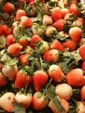 Las fresas Imagenes de archivo