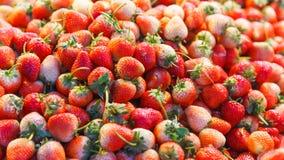 Las fresas de jardín de la fruta de la fresa con su aroma, color rojo brillante, textura jugosa, y dulzor, están frescas comido o fotografía de archivo libre de regalías