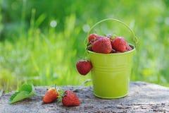 Las fresas maduras recientemente escogidas bucket en fondo de madera Imagen de archivo libre de regalías