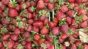 Las fresas se alinearon en el colmado foto de archivo