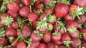Las fresas se alinearon en el colmado fotografía de archivo