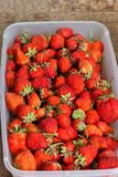 Las fresas se cierran para arriba Fondo imagen de archivo libre de regalías