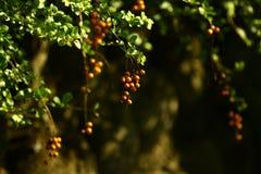 Las frutas Imagenes de archivo