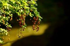 Las frutas 2 Foto de archivo