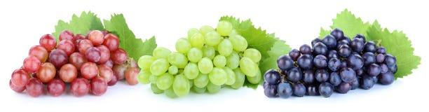 Las frutas azulverdes rojas de las uvas dan fruto aislado en blanco Fotos de archivo libres de regalías
