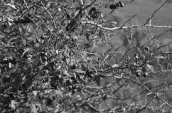 Las frutas de arbustos salvajes Excursi?n del verano en el ?rea fotos de archivo