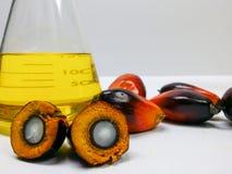Las frutas de la palma y el aceite de palma, una fruta se corta para mostrar su corazón Imágenes de archivo libres de regalías