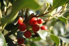 Las frutas de la primavera fotos de archivo
