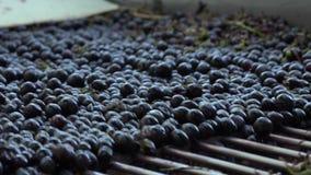 Las frutas pasan encendido la tabla vibrante metrajes