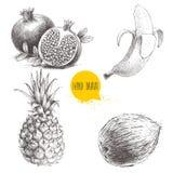 Las frutas tropicales dibujadas mano del estilo del bosquejo fijaron aislado en el fondo blanco Plátano, coco, piña y granadas co Fotos de archivo libres de regalías