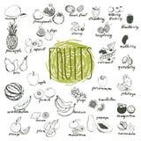Las frutas vector el conjunto Imagen de archivo