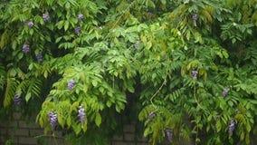 Las fuertes lluvias, fuerte viento sacuden las ramas de los árboles, drenes del agua de lluvia metrajes
