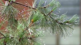 Las fuertes lluvias salpican el camino, y árboles en un área residencial una tempestad de truenos del verano metrajes