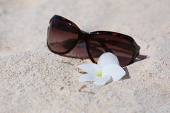 Las gafas de sol en enarenan con la flor Fotografía de archivo