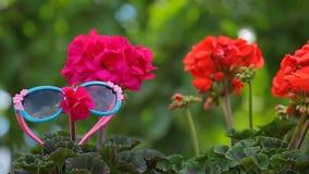 las gafas de sol de la flor enrollan la cantidad del hd del jardín del fondo del árbol metrajes
