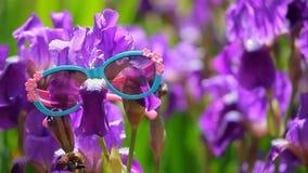 Las gafas de sol p?rpuras de la flor del iris cultivan un huerto metrajes