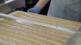 Las galletas crudas se mueven en transportador en fábrica de la panadería para conseguir en estufa metrajes