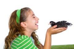 Las gallinas del criador embroman al granjero del ranchero de la muchacha con los polluelos del pollo foto de archivo