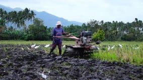 Las garcetas blancas vuelan mientras que el trabajador de granja utiliza el tractor de la mano que ara la máquina para prepararse almacen de metraje de vídeo