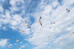 Las gaviotas del grupo están volando en el cielo azul de la nube Imagenes de archivo