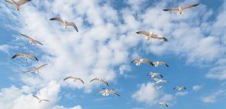 Las gaviotas del grupo están volando en el cielo azul de la nube Foto de archivo libre de regalías