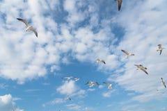 Las gaviotas del grupo están volando en el cielo azul de la nube Imagen de archivo libre de regalías