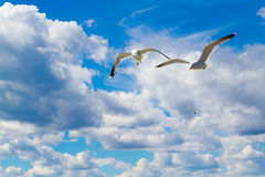 Las gaviotas del vuelo Foto de archivo libre de regalías