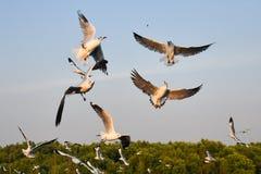 Las gaviotas están cogiendo la comida Imágenes de archivo libres de regalías