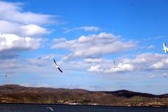 Las gaviotas están volando en el mar Foto de archivo libre de regalías