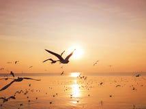 Las gaviotas están volando en la puesta del sol amarilla Foto de archivo