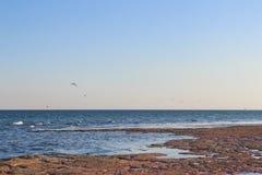 Las gaviotas están volando sobre el fango rosado Fotografía de archivo