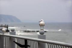 Las gaviotas se sientan en un parapeto contra la perspectiva del mar melancólico Fotografía de archivo