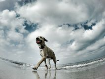 Las gaviotas ven a un perro imágenes de archivo libres de regalías