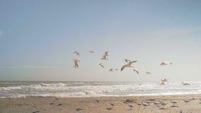 Las gaviotas vuelan al viento en la playa del mar almacen de metraje de vídeo