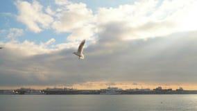 Las gaviotas vuelan contra el cielo con las nubes almacen de video