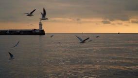 Las gaviotas vuelan contra el contexto del embarcadero con un faro Tiempo de la tarde almacen de video