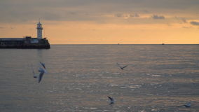 Las gaviotas vuelan contra la perspectiva de un topo con un faro en la puesta del sol metrajes