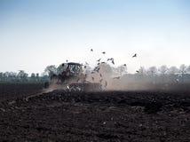 Las gaviotas vuelan en el alimentador Imagen de archivo