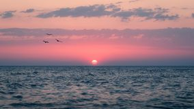Las gaviotas vuelan en el sol fotografía de archivo