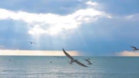 Las gaviotas vuelan sobre el mar durante una tormenta metrajes