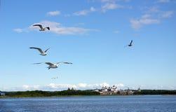 Las gaviotas vuelan sobre el monasterio de Solovki Foto de archivo libre de regalías