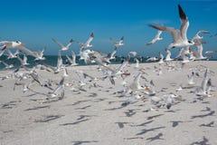 Las golondrinas de mar toman vuelo Imagenes de archivo