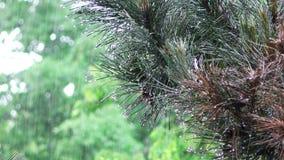 Las gotas de agua del agua en verde salen de la planta en naturaleza almacen de metraje de vídeo