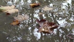 Las gotas de la lluvia bajan en el agua La porción de descenso remonta - círculos concéntricos en el agua Fondo natural, nublado metrajes