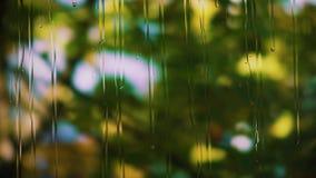 Las gotas de la lluvia corridas abajo del vidrio, las ramas de un árbol con las hojas verdes se están sacudiendo en un fondo borr almacen de metraje de vídeo
