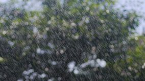 Las gotas de la lluvia del verano en los árboles, gotas de agua bajan del cielo, lluvia a través de la sol almacen de metraje de vídeo