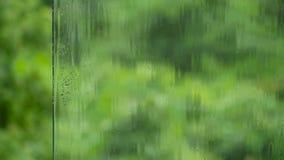 Las gotas de la lluvia fluyen abajo de la superficie del vidrio contra los verdes jugosos almacen de metraje de vídeo