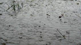 Las gotas de la lluvia raras, grandes bajan en el agua oscura del río En el agua, la hierba flotante y la ruina metrajes