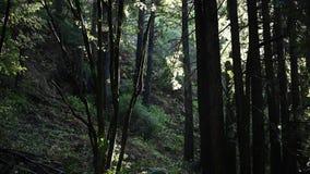 Las gotas de lluvia bajan a través del bosque almacen de metraje de vídeo